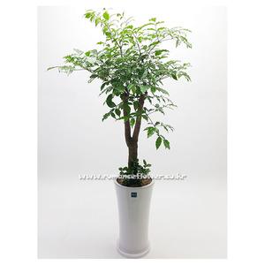 행복나무 2호(해피트리)
